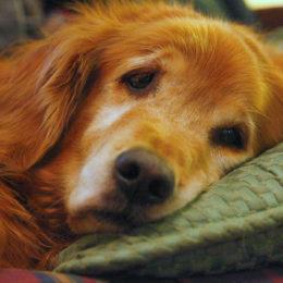 Stop the Murder of Neighborhood Pets