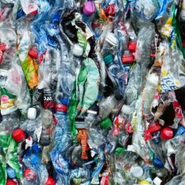 Ban Single-Use Plastic Products in the European Union