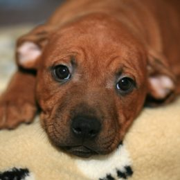 Puppy Reportedly Dropped Out of Hotel Window Deserves Justice