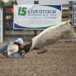 Ban the Torture of Animals at Rodeo Events