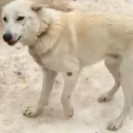 Justice for Dog Found Dead in Sled Dog Tours Exposé
