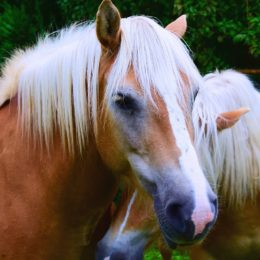 Tell Airport to Stop Shipping Live Horses for Slaughter