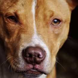 Reverse Unfair Ban on 'Aggressive' Dog Breeds