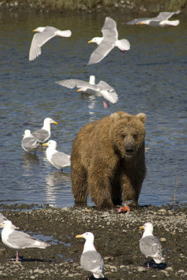 Protect Alaska's Bears, Wolves, and Other Rare Animals from Slaughter