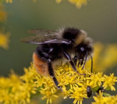 End the Siege Against Endangered Pollinators