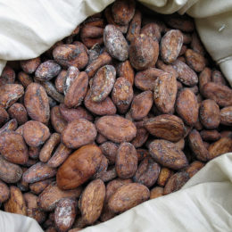 Bring An End to Deforestation at the Hands of the Chocolate Industry