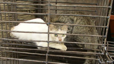 Success: America's Pets to be Protected with Dog and Cat Meat Prohibition
