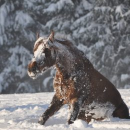 Justice for 70 Horses Abandoned to Die in the Snow