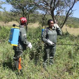 Combat Invasive Plants Threatening South Africa's Ecosystems