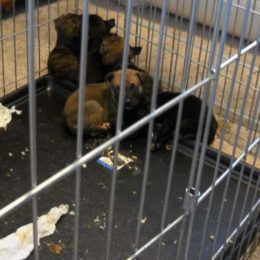 Puppies Who Died Due to Alleged Neglect Deserve Justice