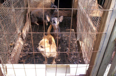 Ban Stores From Selling Abused Puppy Mill Animals