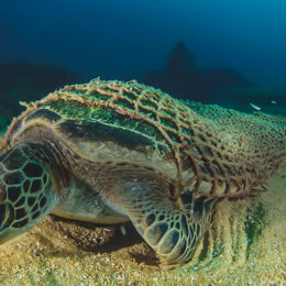 Stop Marine Animals From Drowning in Abandoned Fishing Gear