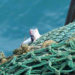 Save Our Ocean Environments: Ban Deep-Sea Trawling