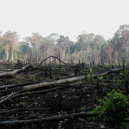Applaud Greenpeace for Parting Ways with Major Offender of Deforestation