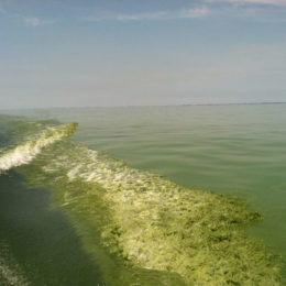 Protect Source of Drinking Water for Millions from Harmful Algae Blooms