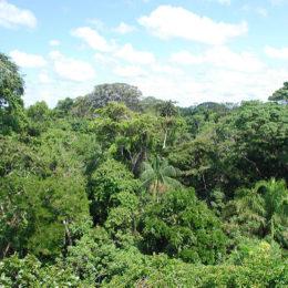 End Deforestation That's Killed Millions of Acres of Habitat