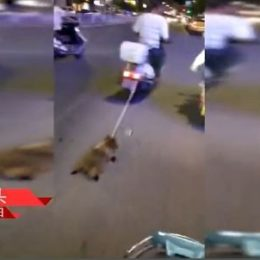 Find and Punish Man Who Dragged a Dog Behind His Scooter