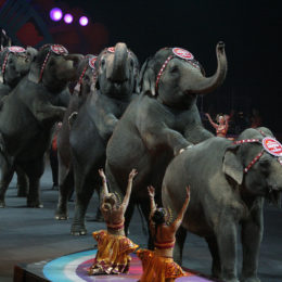Put an End to Circus Animal Suffering in New Jersey