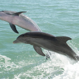 Applaud Mexico City for Banning Dolphin and Sea Lion Captivity