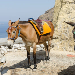 Stop the Cruel Mistreatment of Donkeys Used to Carry Tourists