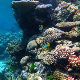 Success: Australia to Invest Millions in Great Barrier Reef Protection