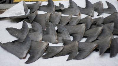 Stop Serving Shark Fin Soup at Restaurants and End the Slaughter of Endangered Sharks