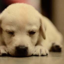 Puppies Allegedly Used to Smuggle Heroin Deserve Justice