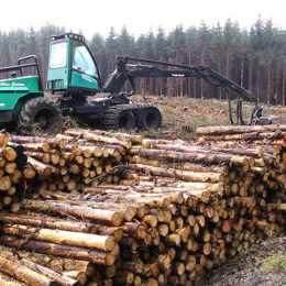 End Destructive Logging in America's South