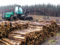 End Destructive Logging in America's South