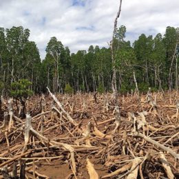 End Drought-Inducing Deforestation in Ghana