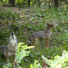 Forbid Cruel Wildlife Killing Contests