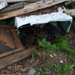 Dog Buried in Cage and Starved to Death Deserves Justice