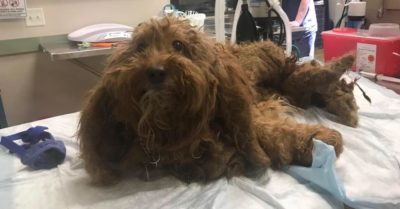 Dog Reportedly Covered in Maggots and Matted Hair Deserves Justice