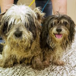 Two Dogs Allegedly Severely Matted and Malnourished Deserve Justice
