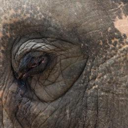 Send Asha the Elephant to a Sanctuary
