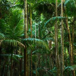 End Major Financier's Destruction of the World's Rainforests