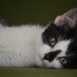 Kitten Allegedly Thrown, Disemboweled, and Killed Deserves Justice