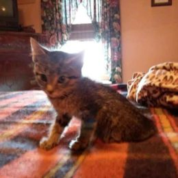 Kitten Allegedly Struck and Thrown Against Wall Deserves Justice