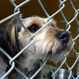 Prevent Animal Abusers From Working With Animals