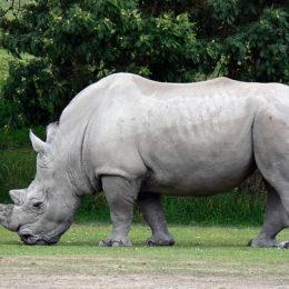 Support Harsher Sentences for Wildlife Poachers