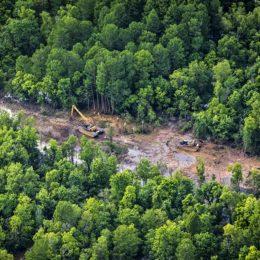 Don't Allow Pipeline Through Sensitive Bayou Habitat