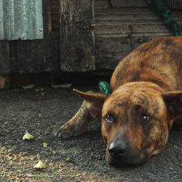 Success: South Korea Outlaws Killing Dogs for Meat