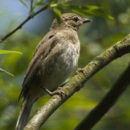Stop the Disappearance of Songbirds' Habitat
