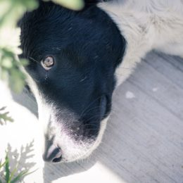 Dog Reportedly Found Hanging from Porch Railing Deserves Justice