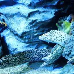 Save Endangered Eels From Cocaine Poisoning