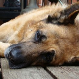Punish Man Who Allegedly Used Power Washer on Dogs