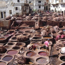 End the Leather Industry's Inhumanity and Toxic Pollution of Drinking Water