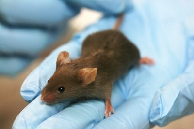 Support Major Food Companies in Banning Animal Testing