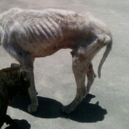 Thousands of Dogs Found Starving and Beaten Deserve Justice