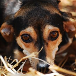 Applaud Town for Ban on Fireworks That Cause Anxiety in Animals